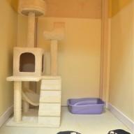 cat-suite-01